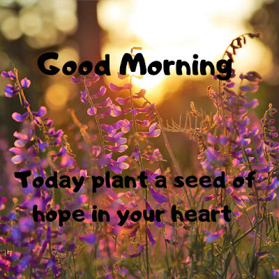 Good Morning Images With Flowers HD