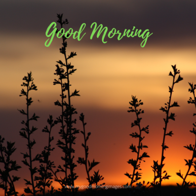 Good Morning Wallpaper Download For WhatsApp